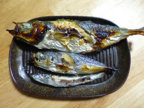 釣りの成果.JPG